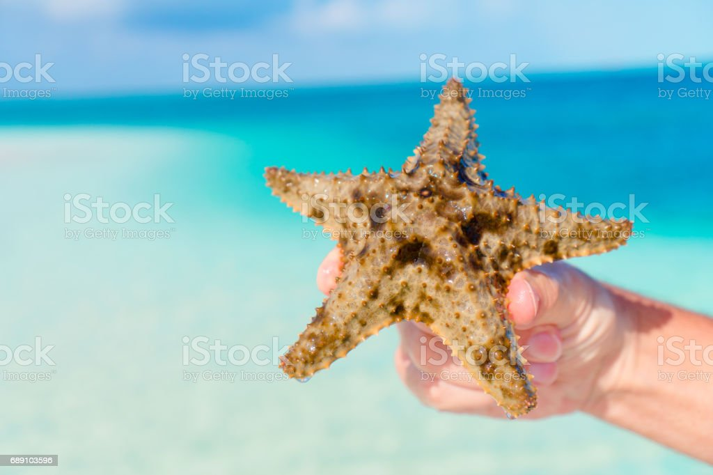 Close up starfish in hands background the turquoise sea stock photo