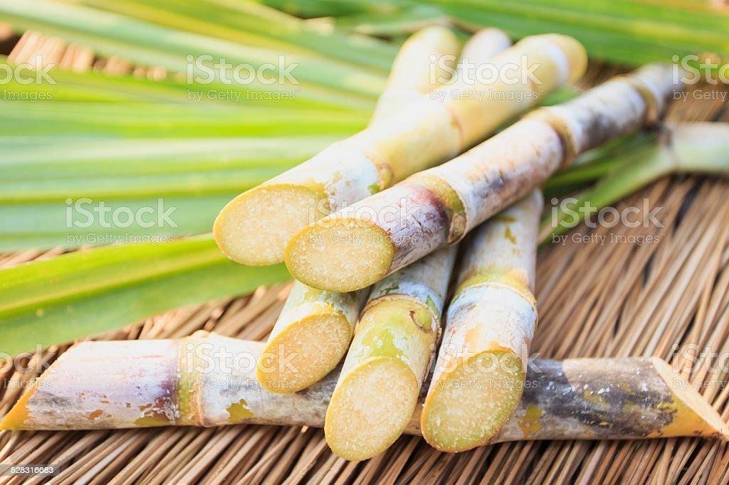 Close up Sugarcane stock photo