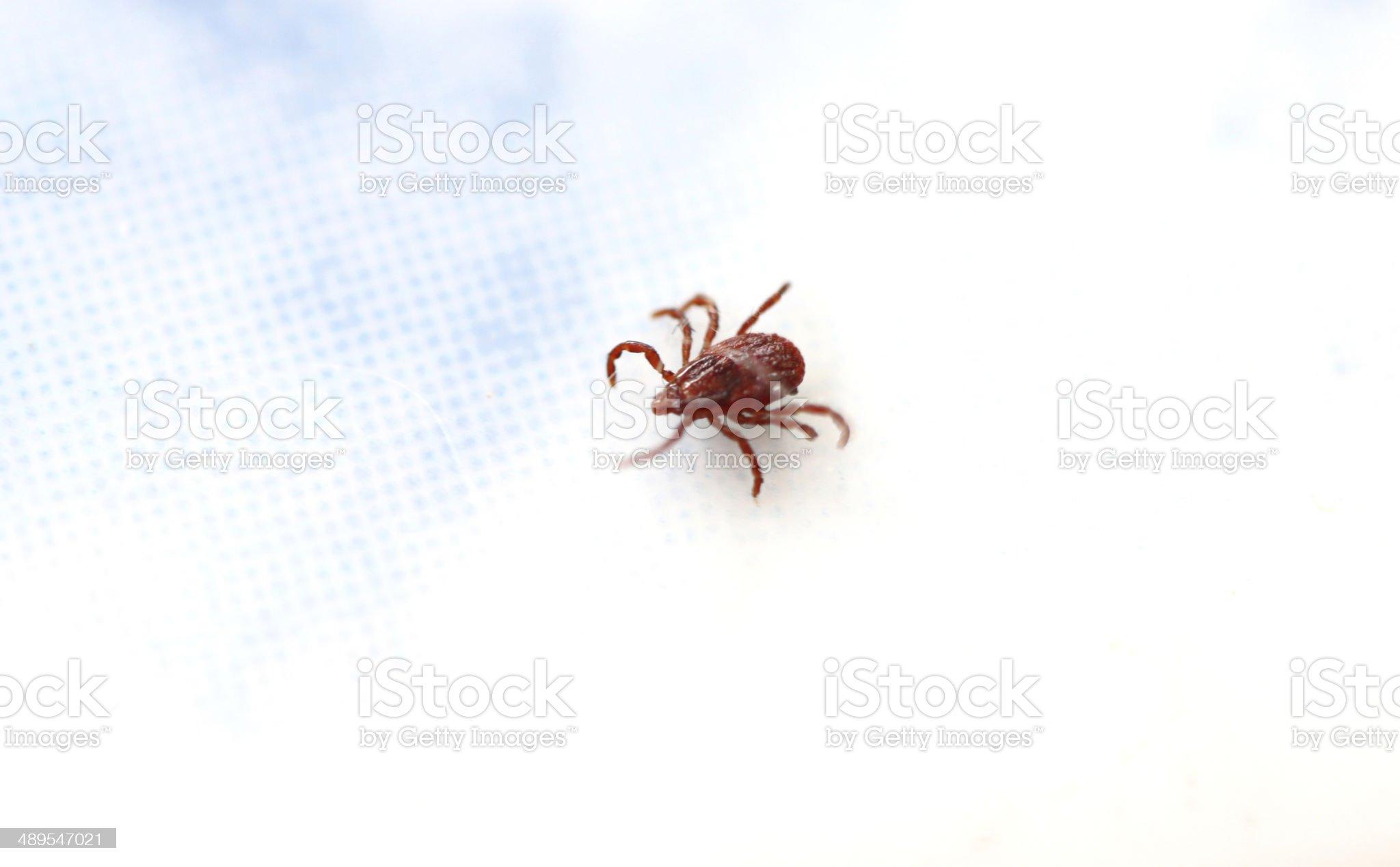 close up the ticks. royalty-free stock photo