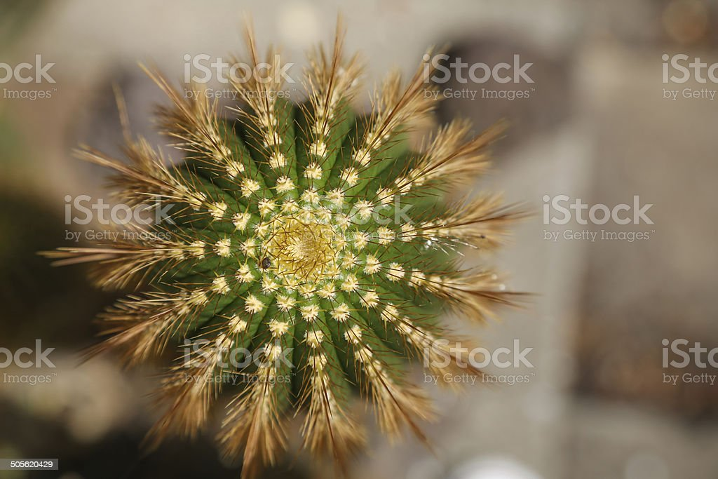 Close up top of a cactus royalty-free stock photo