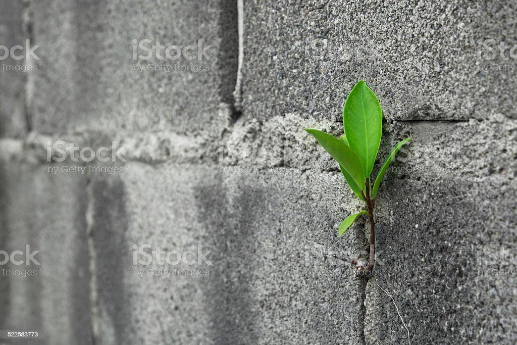 Close up Tree on brick wall stock photo