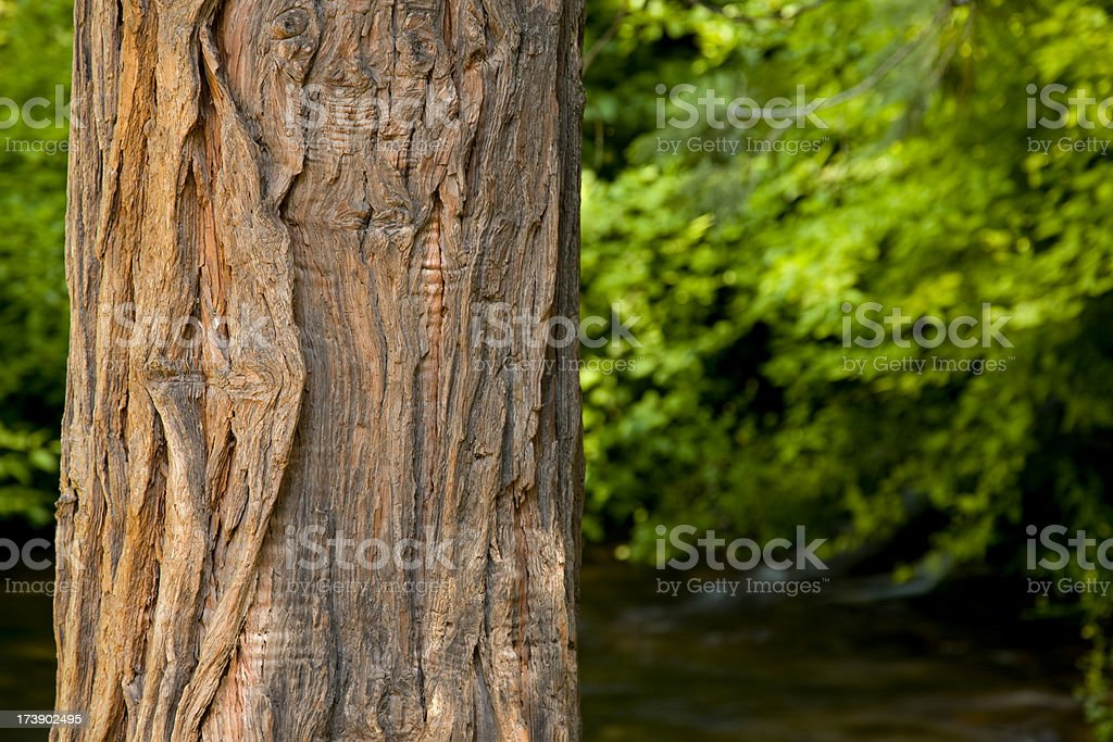 Close up tree trunk with lush green foliage in background stock photo