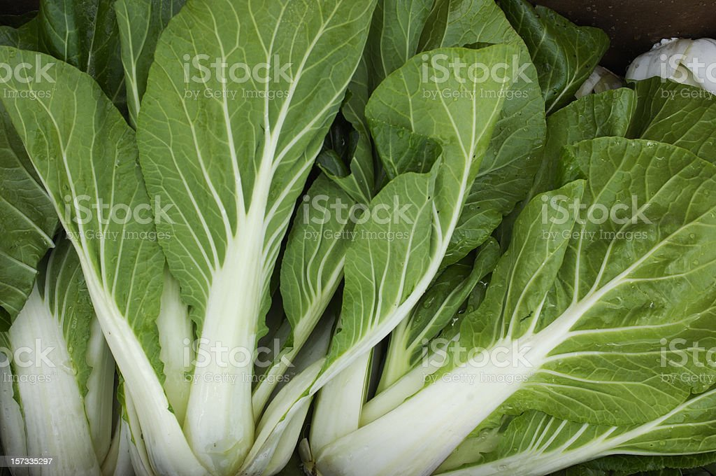 Close up view of fresh Bok Choy stock photo