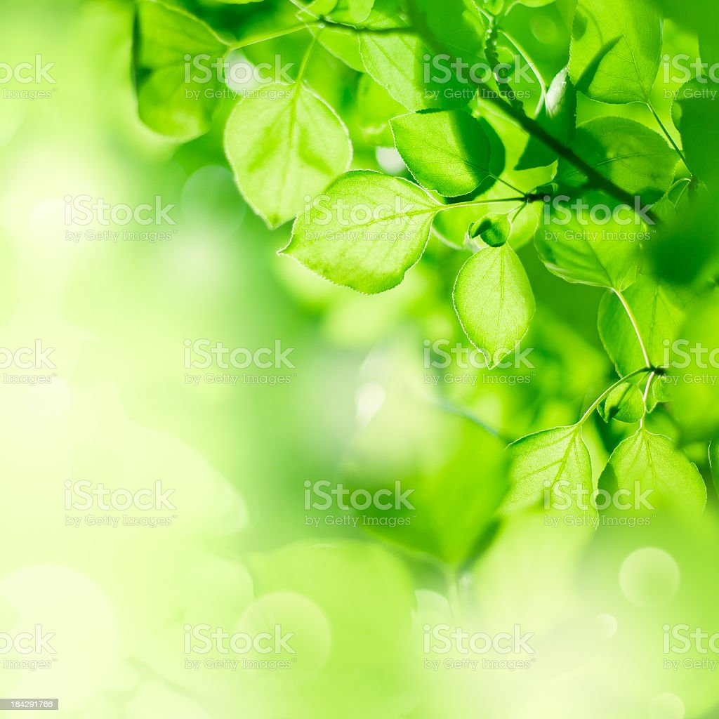 Close up view of leaves in the trees, on a sunny day  royalty-free stock photo