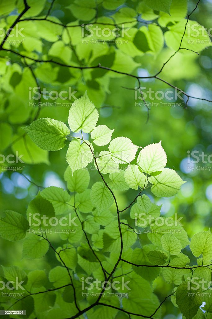 Close up view of leaves stock photo