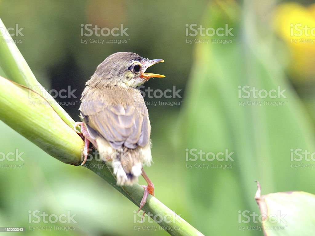 Close up view of nice little bird stock photo
