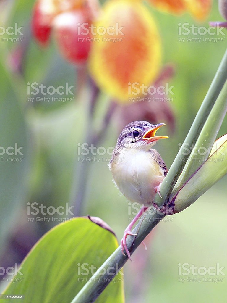 Close up view of nice little bird royalty-free stock photo