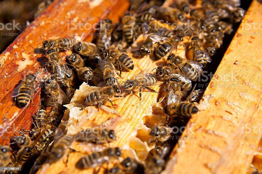 Close up view of the bees swarming en panal. foto de stock libre de derechos