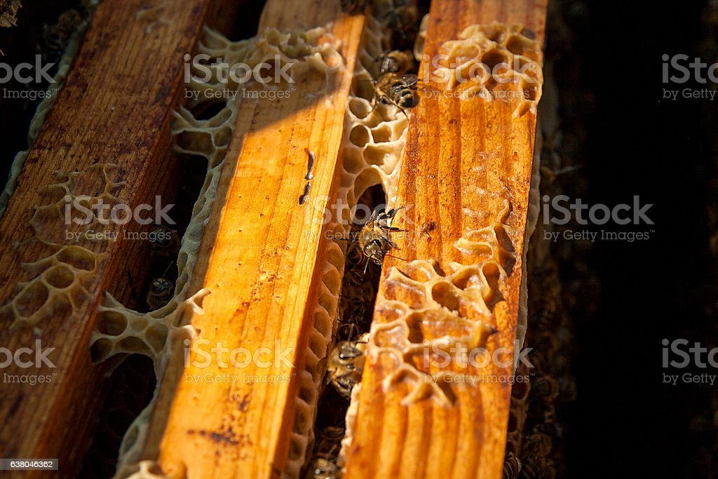 Close up view of the bees swarming on a honeycomb. stock photo