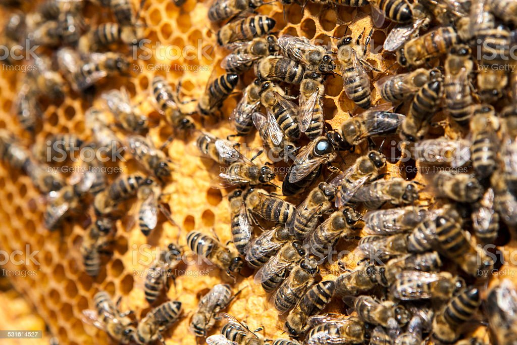 close up view of the working bees on honey cells stock photo
