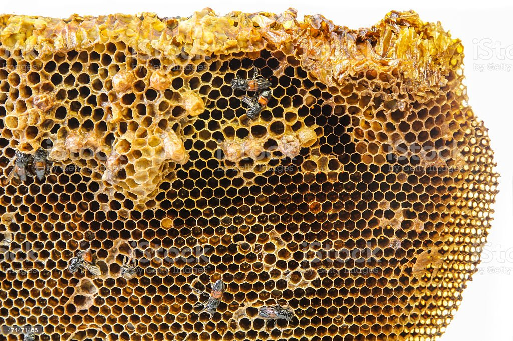 Close up view of the working bees on honeycomb stock photo