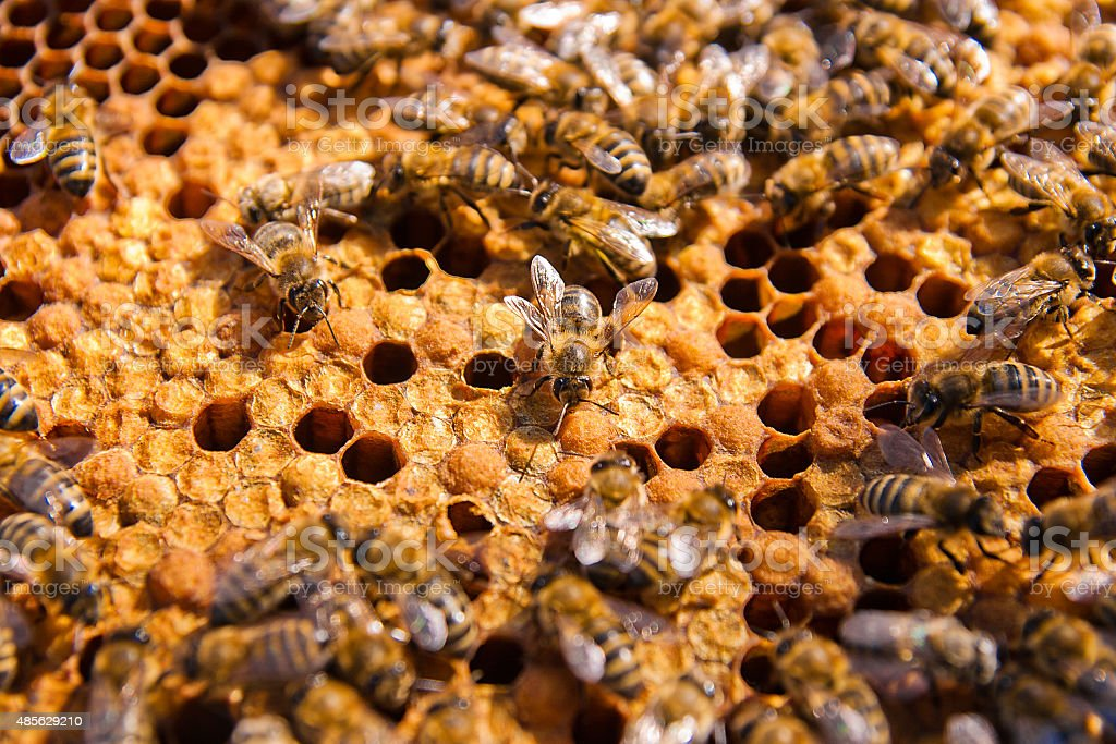 Clos'up view of bees on panal el trabajo. foto de stock libre de derechos