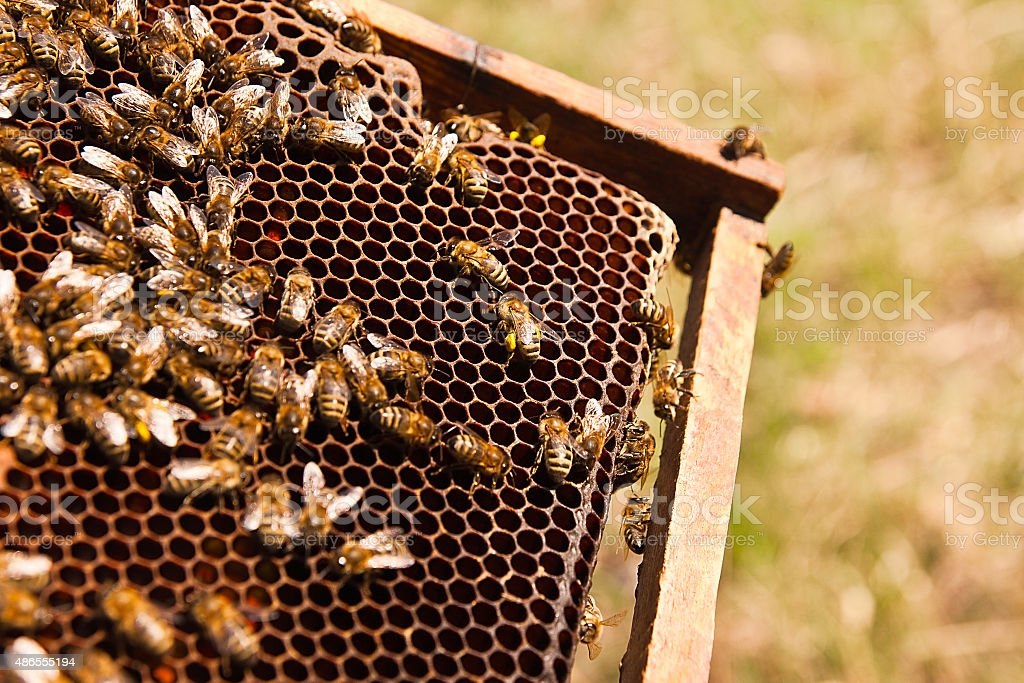Clos'up view of bees on panal el trabajo. foto de stock libre de derechos
