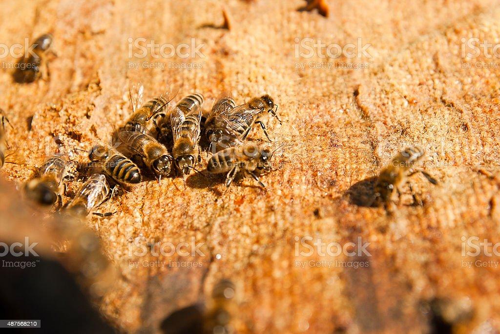 Close up view of bees el trabajo foto de stock libre de derechos
