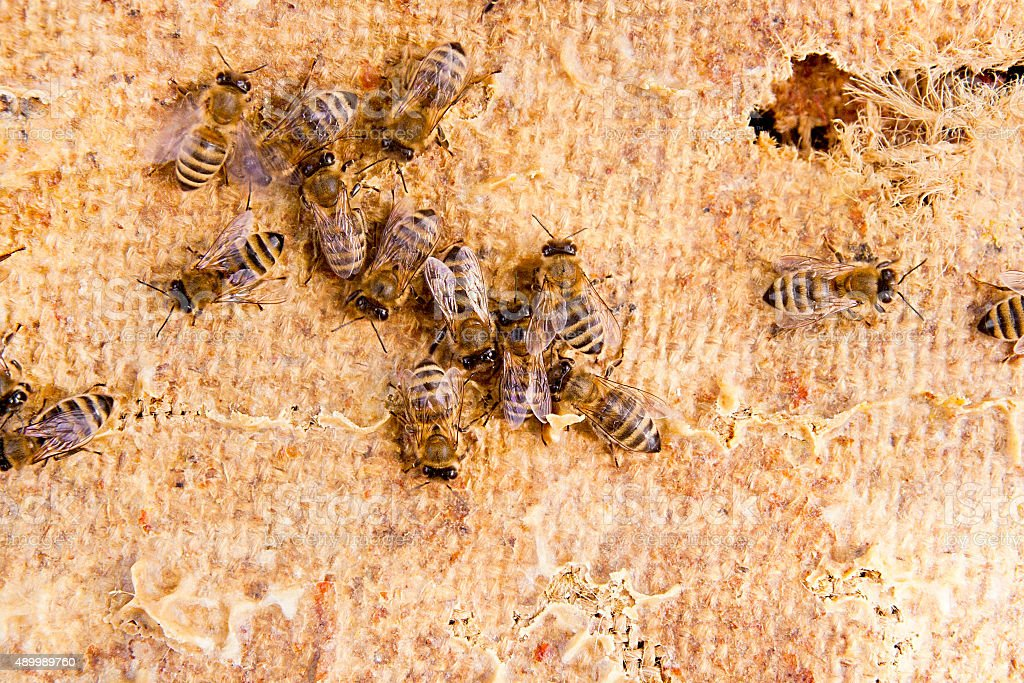Close up view of bees el trabajo. foto de stock libre de derechos