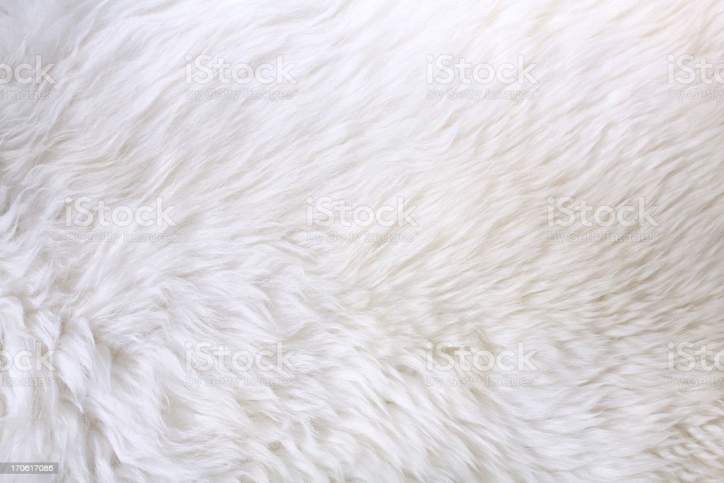 Close up view of white fur detail stock photo