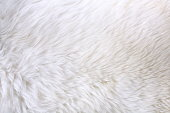 Close up view of white fur detail