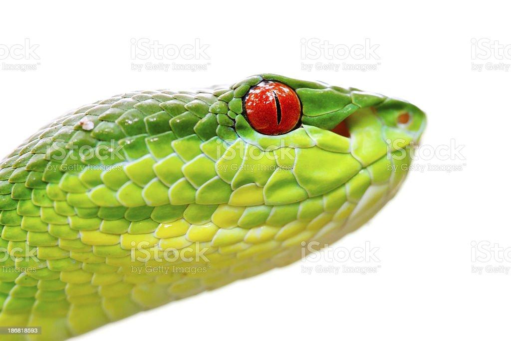 Close up Viper head royalty-free stock photo
