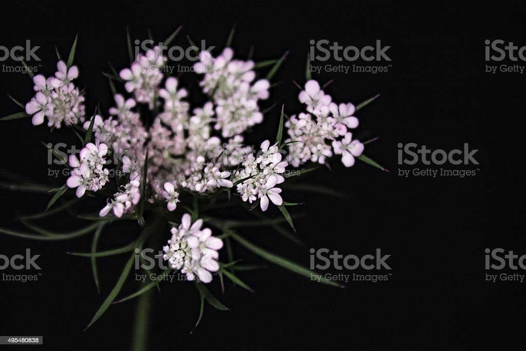 Close up white flowers royalty-free stock photo
