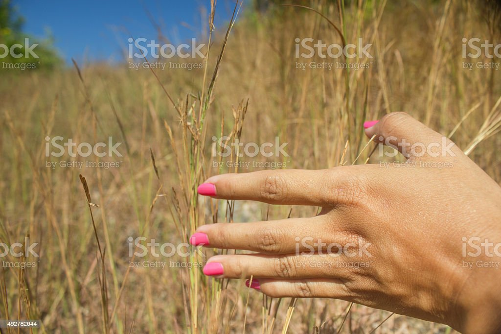 Close up woman hands in the grassland stock photo