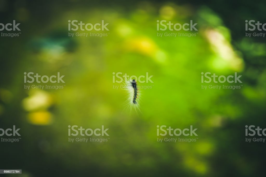 Close up Worm hanging down from the tree with sunlight .Selected focus stock photo