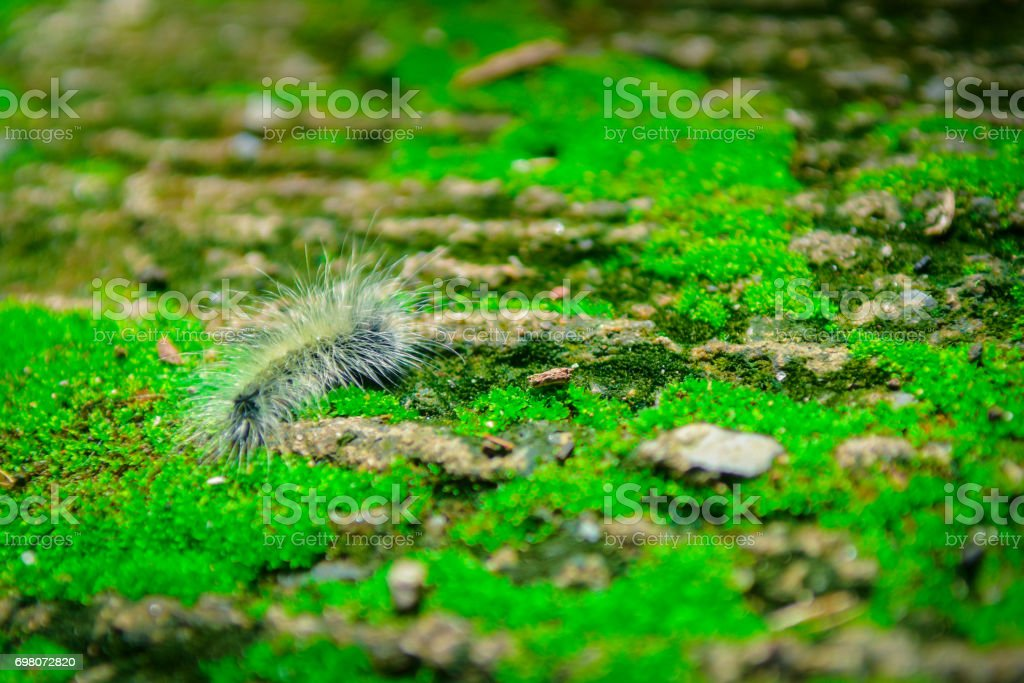 Close up Worm on green Moss with sunlight.Selected focus stock photo