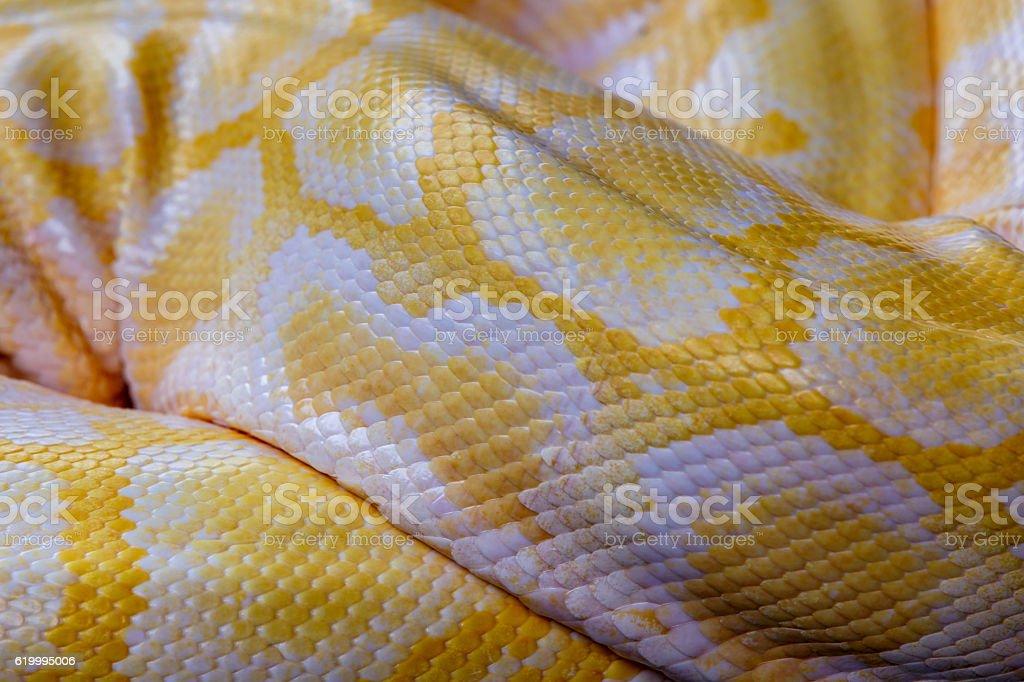 Close up yellow python skin background stock photo