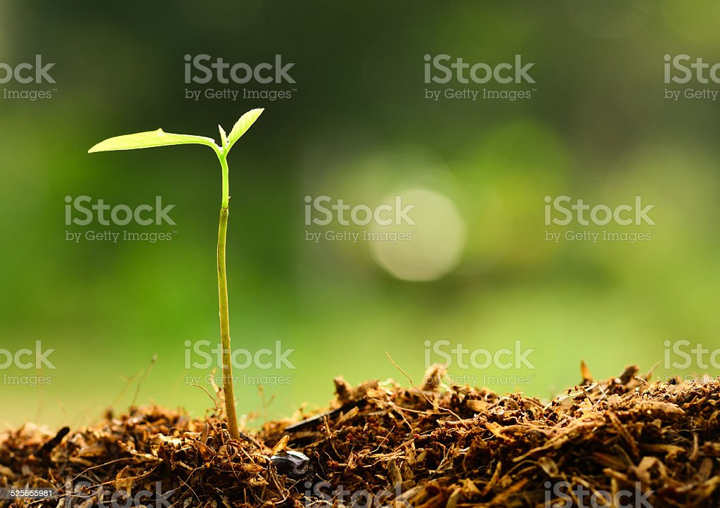 Close up Young plant growing with rain water drop stock photo