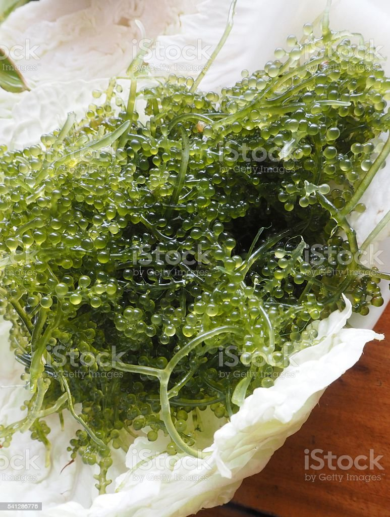 Close up:Seaweed on vegetable stock photo