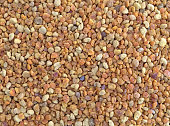 Close view of bee pollen granules