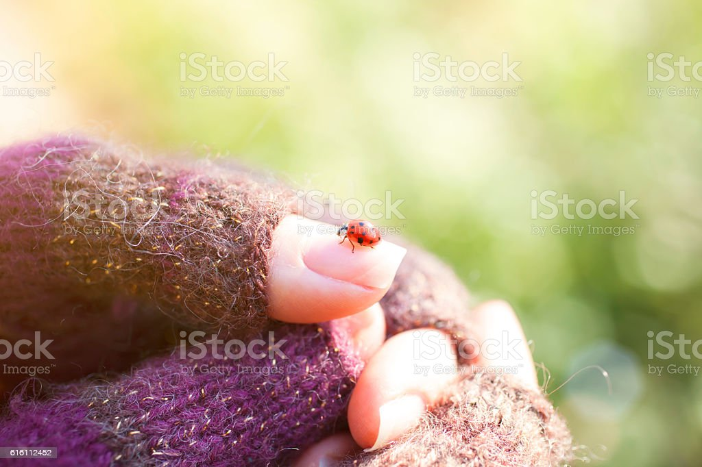 Close view of ladybug standing on female finger stock photo