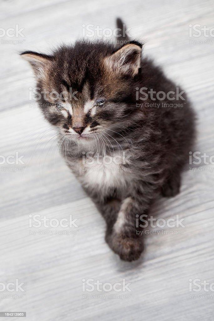 Closed Eye Kitten's Kitty Controling laminates stock photo