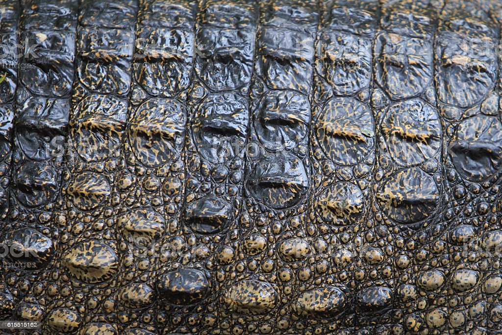 Closed up picture of skin ofcrocodile royalty-free stock photo
