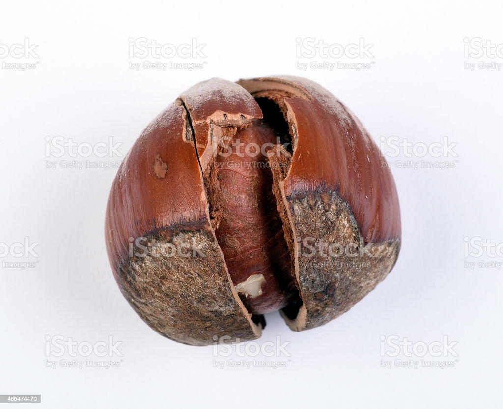Closed-up cracked hazelnut stock photo