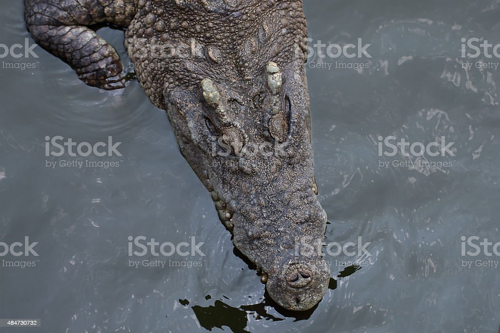 Closeup a crocodile head stock photo