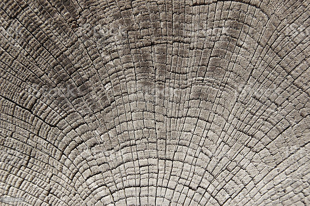 Close-up annual rings, tree trunk cross section stock photo