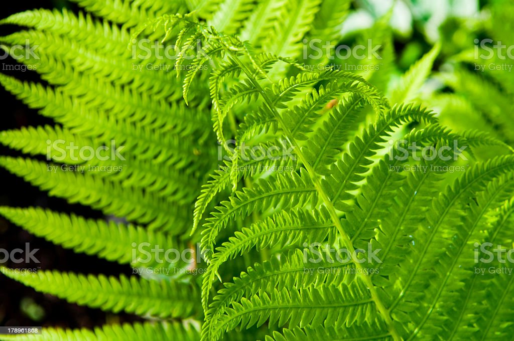 Close-up background image of bright green fern leaves stock photo