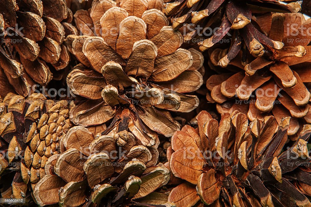 Closeup background texture of dried pine cones. stock photo