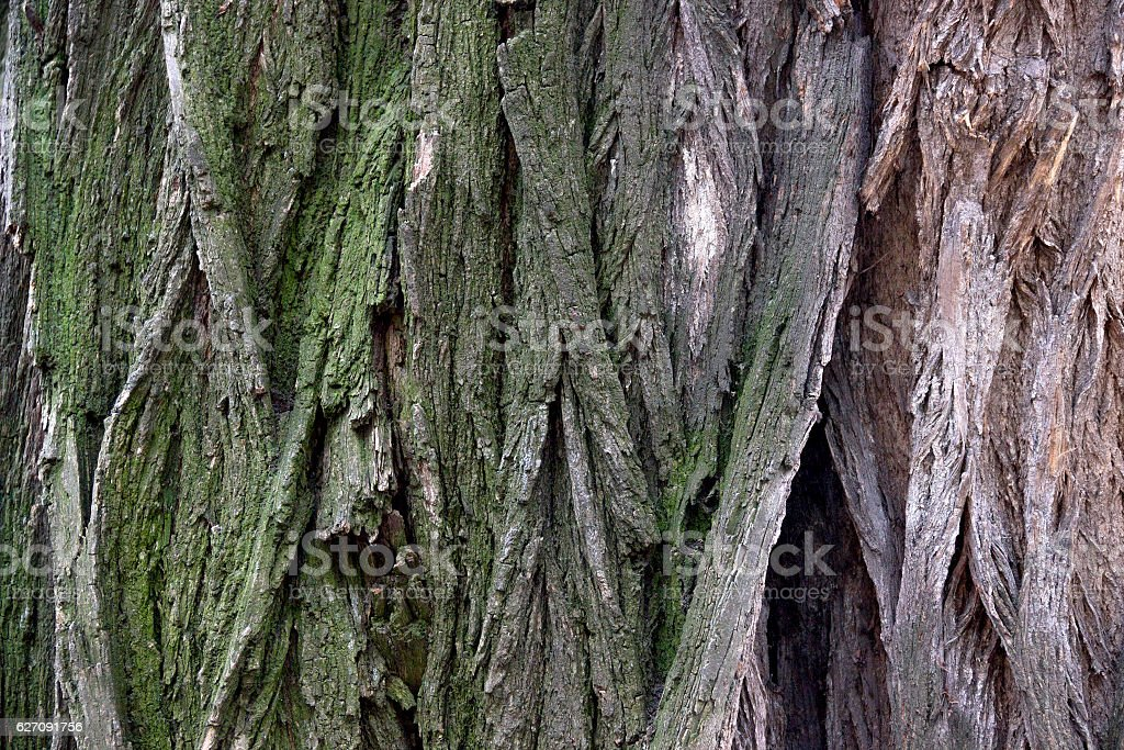 close-up bark of tree stock photo