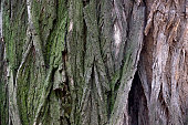 close-up bark of tree