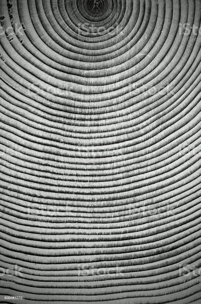 Close-up Black and White Wood Rings From a Conifer Tree stock photo
