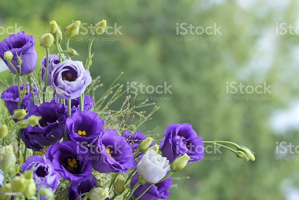 Close-up bouquet of violet flowers royalty-free stock photo