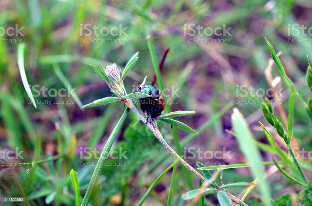 Closeup bug life on flower plant in green blurred background stock photo