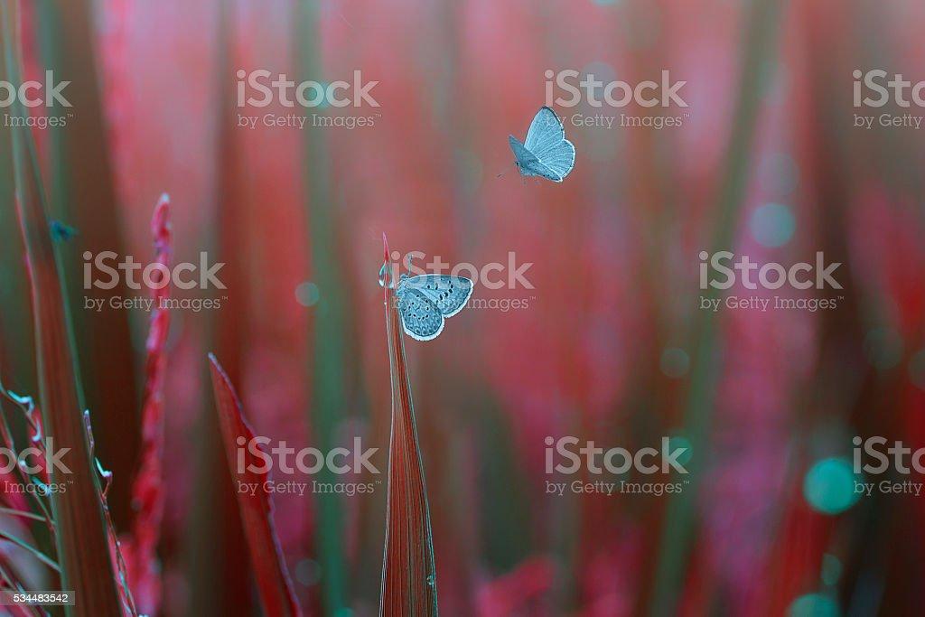 closeup butterflies on the grass stock photo
