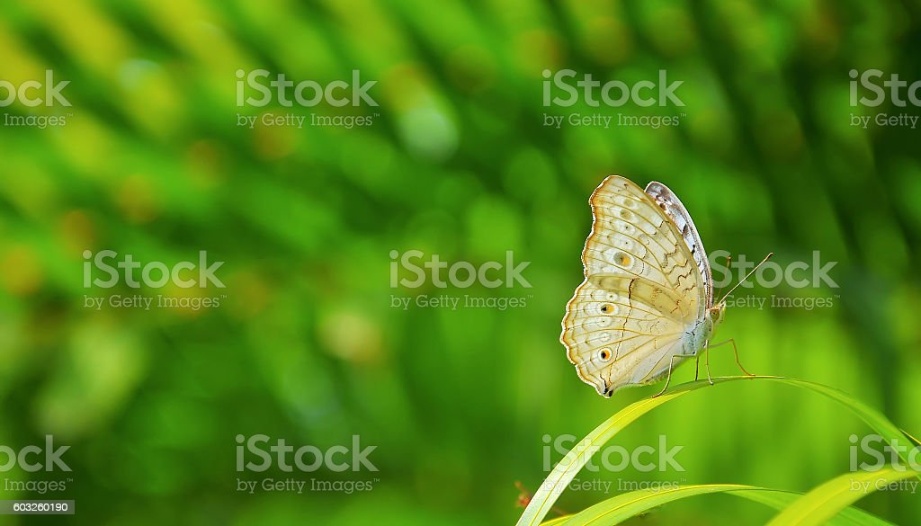 Closeup butterfly on leaf stock photo