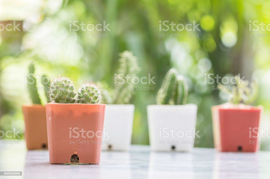 Closeup cactus in brown plastic pot on mable table at the in front of house with blurred garden view textured background stock photo