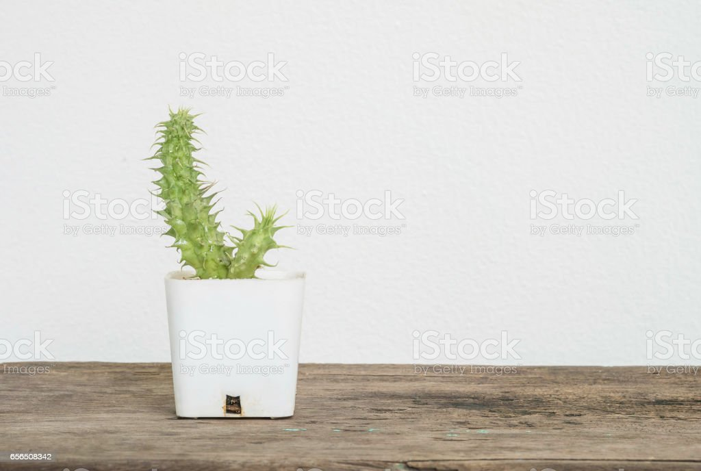 Closeup cactus in white plastic pot on blurred wood desk and white cement wall textured background with copy space stock photo