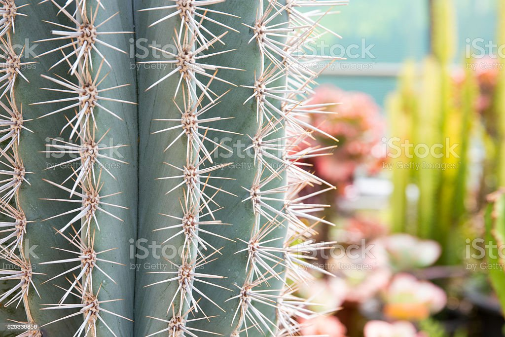 Close-up cactus. stock photo