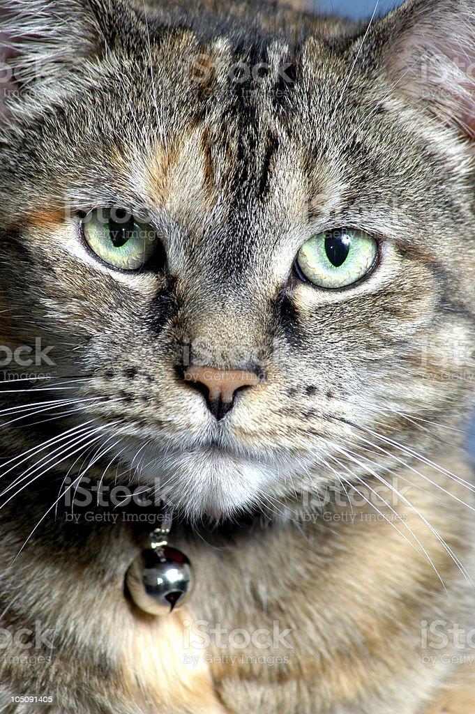 CloseUp Cat royalty-free stock photo