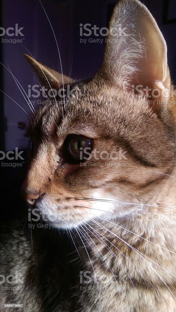 Close-Up Cat Profile stock photo